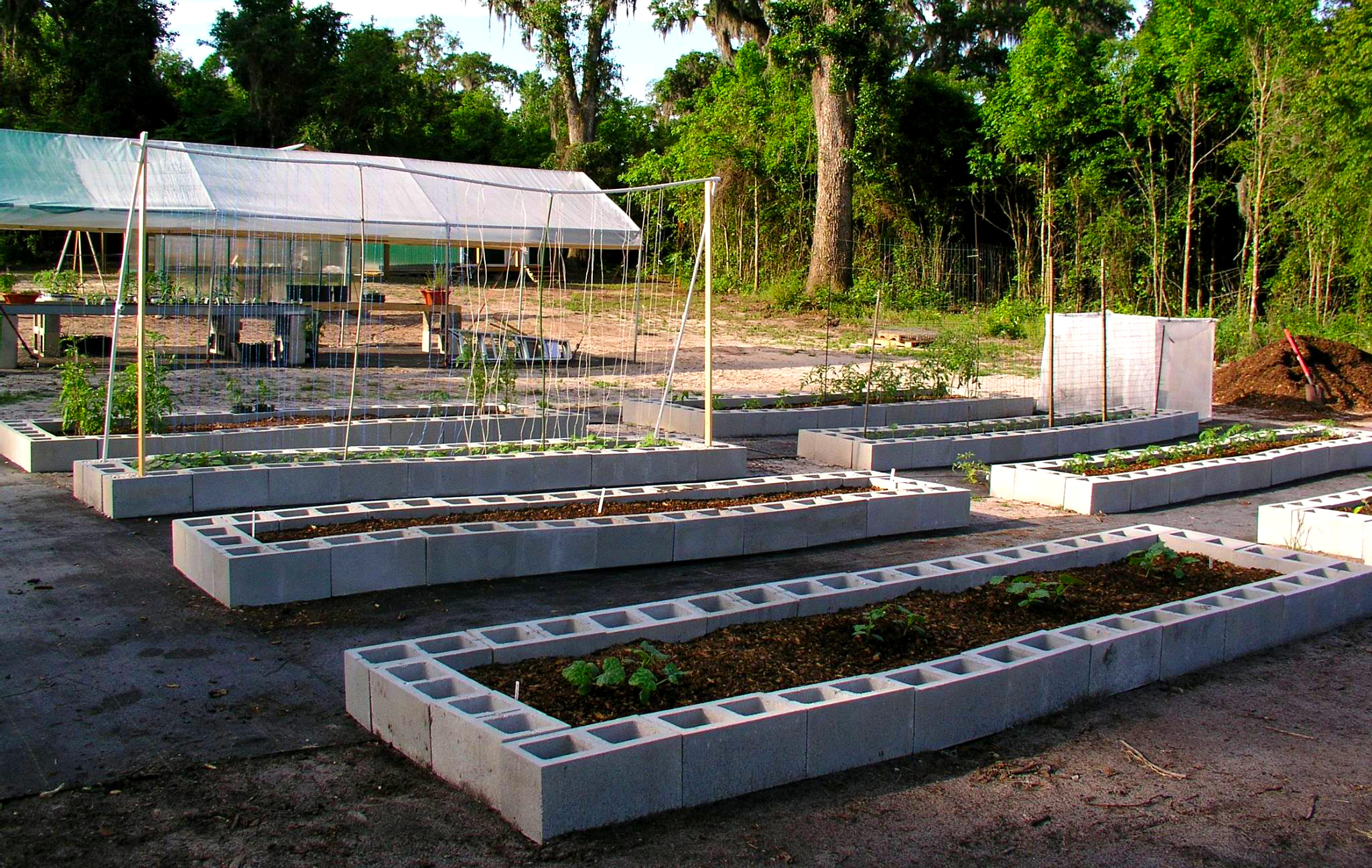Florida raised beds gardens growin 39 crazy acres for Cinder block pond