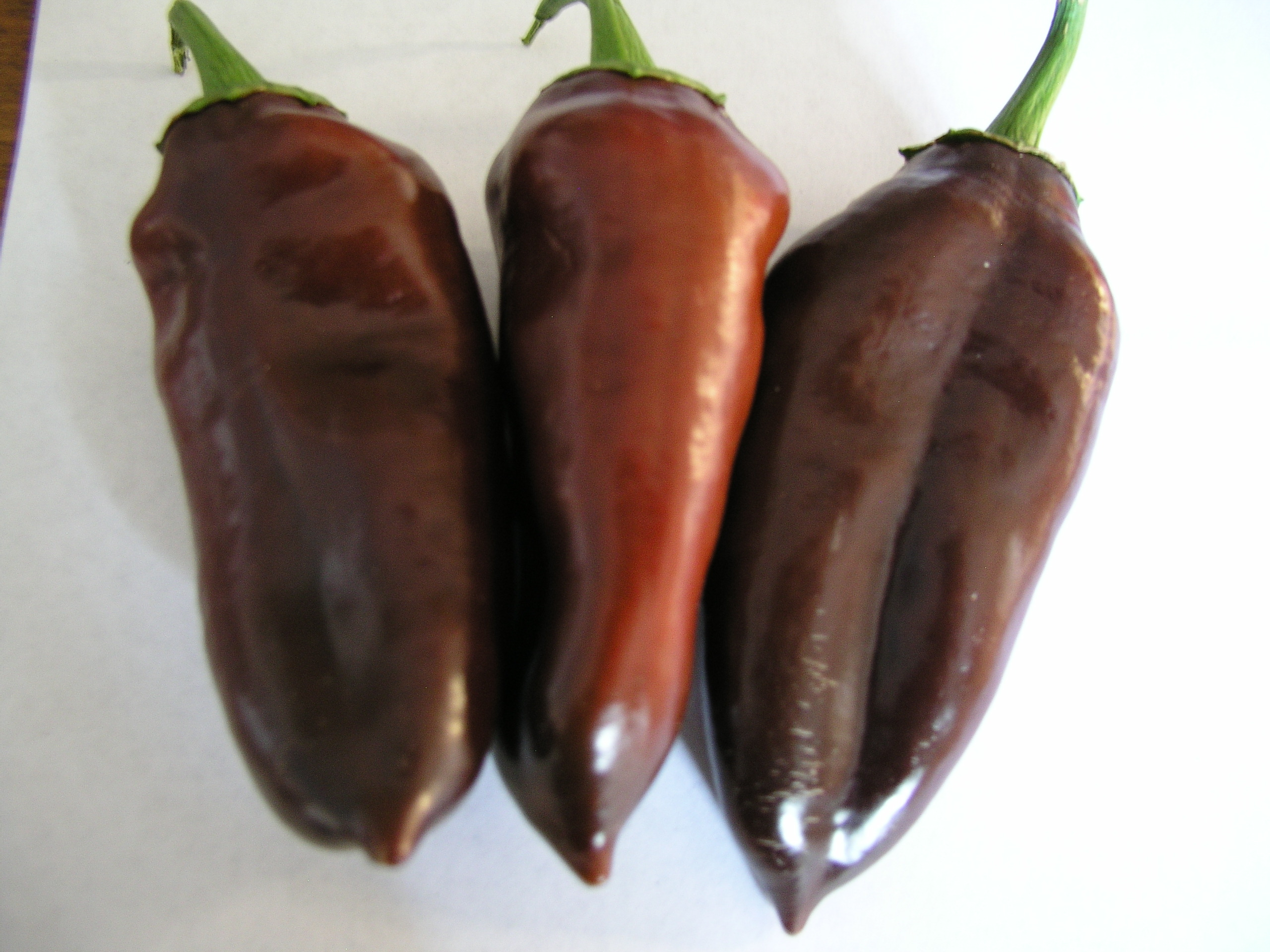 Chocolate Bell Pepper Recipes