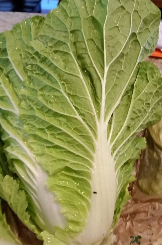 Nappa cabbage Michihili