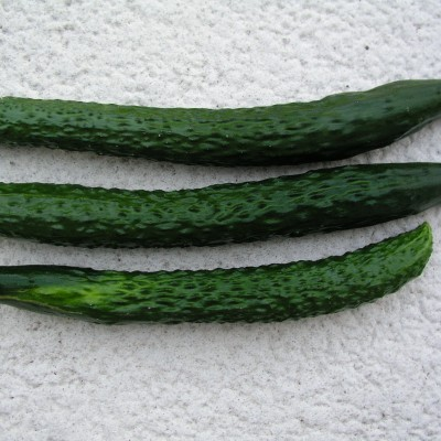 Japanese Long Cucumber
