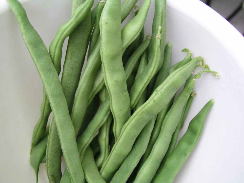 Kentucky Wonder Pole Beans Growin Crazy Acres
