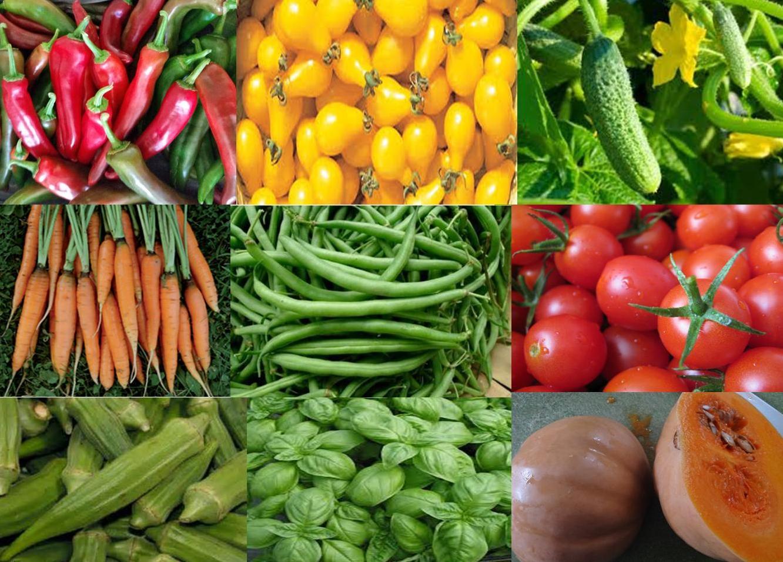 Why Florida Backyard Vegetable Gardener Heirloom Seeds?