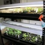 Seed Starting Shelves
