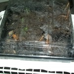 Seed Starting Tray with Lid