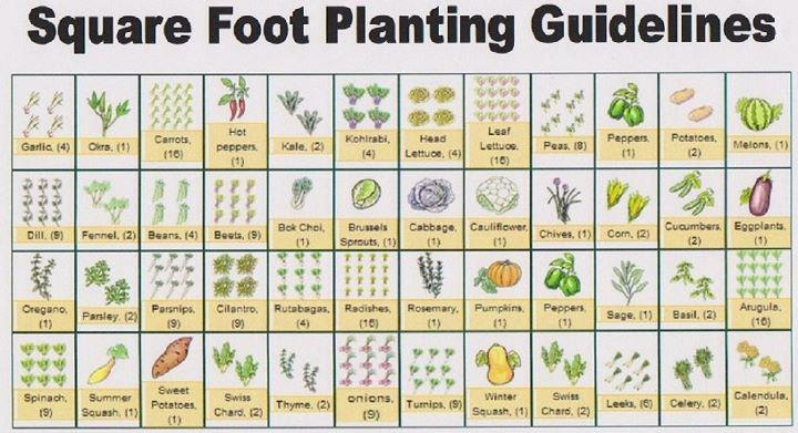 Plant spacing guide