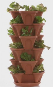 Stackable planter with lettuce