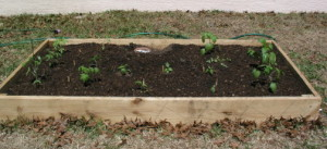 Raised bed with compost mix