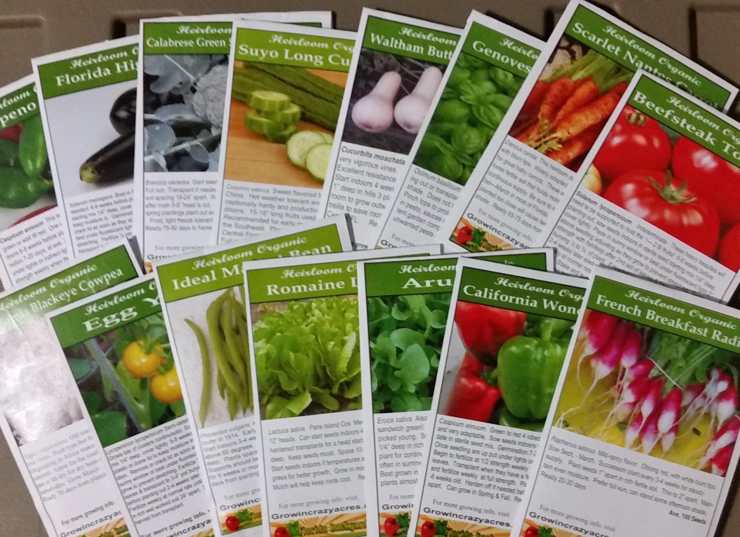 Cornetto di Bordeaux Seeds 500 Endive Escarole Heirloom 2020 Seeds